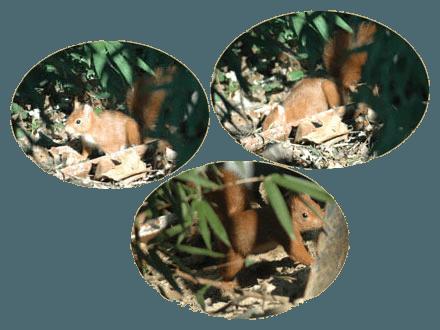 Filtre planté de roseaux - Écureuil